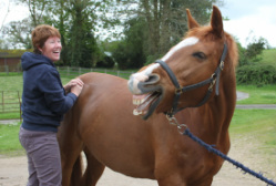 Equine Therapy Case Studies
