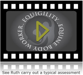 Equine Body Worker assessment video clip